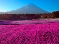 'Japan From Above' tendrá su premiere internacional en MIPDoc 2018
