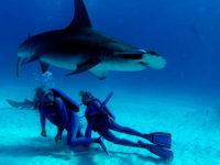 'Las maravillas del mar' – estreno en cines 15 de junio